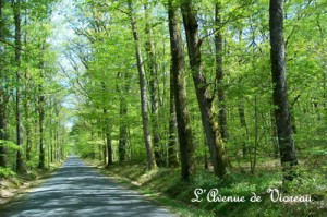 L'avenue de Vioreau