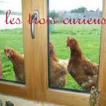 poules à la fenetre